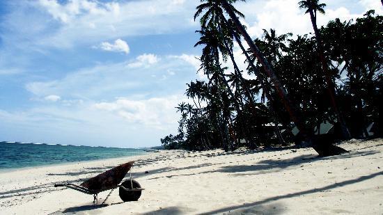 Tambua Sands : Gardener Left His Barrow