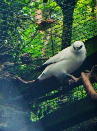Lakeland Wildlife Oasis: Bird