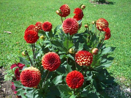 Гардоне-Ривьера, Италия: Flower
