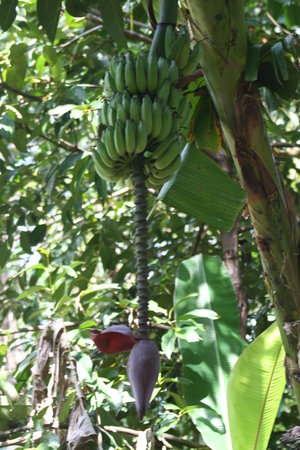 Cape Trib Exotic Fruit Farm