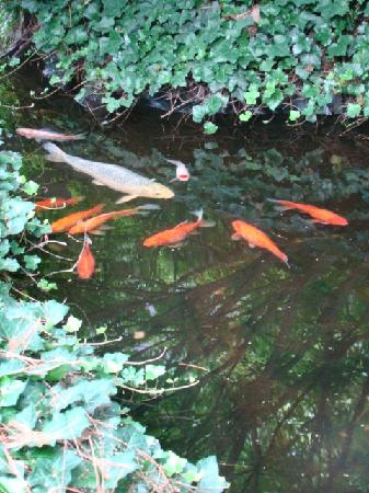 The Courtyard: Fish pond