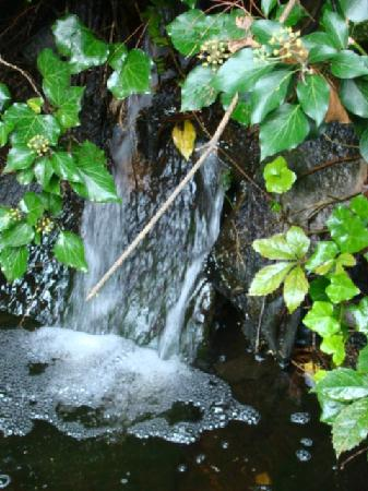 The Courtyard: Small waterfall to the Fish pond