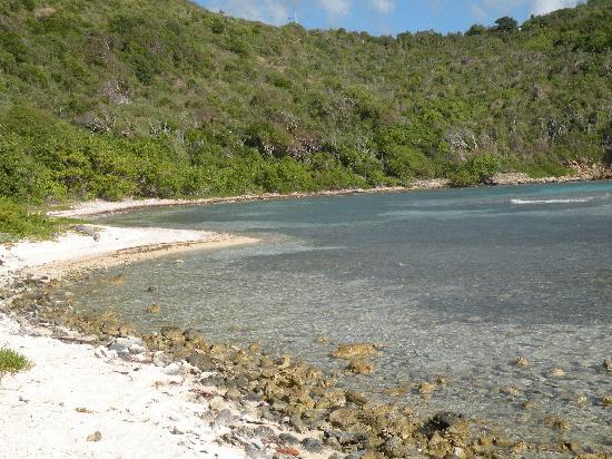 Limestone Beach Water Island St Thomas