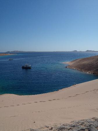 Ras Mohammed, Egypt: Turtle bay