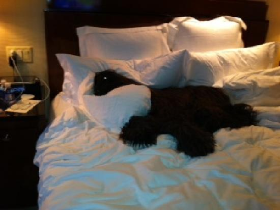 The Ritz-Carlton New York, Westchester: Zazoo chillin'.  Paid $125 extra and not a gift for him like the Holiday Inn provides.  Stingy o