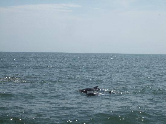 Atlantic City Cruises: Is it a bird, is it a plane? No its Dolphin