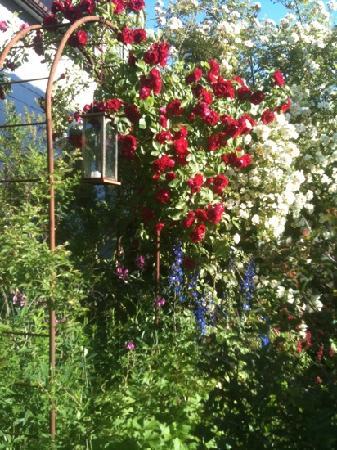 Göteborg, Zweden: Rosor i juli månad