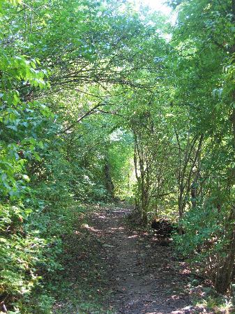 Stream by old mill in june 2011 foto di raven run nature sanctuary