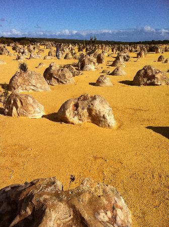 Nambung National Park: can you find me?