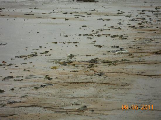 Langkah Syabas Beach Resort: ma quando c'è la bassa marea..