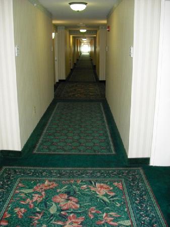 Hilton Garden Inn State College : 4th floor hallway