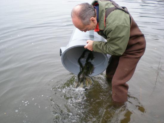 Lac clair saint david de falardeau aktuelle 2018 for Fish stocking ca