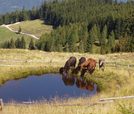 Hotel Tirol: Malga Vernera alta1783 m