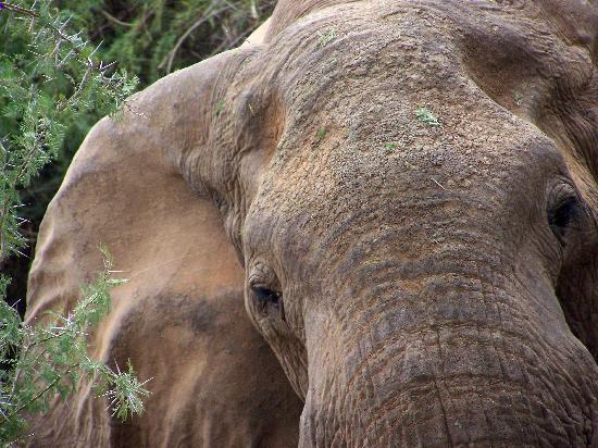 Ndohakashani Tours: foto dal safari 1