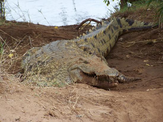 Ndohakashani Tours: foto dal safari 2
