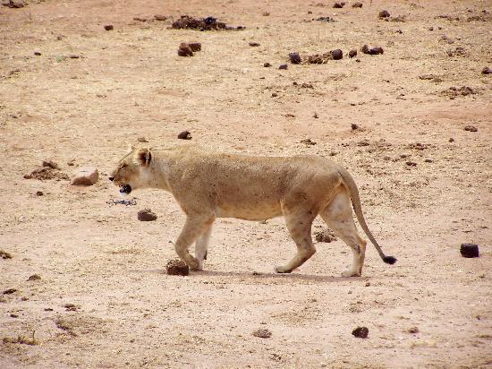 Ndohakashani Tours: foto dal safari 4