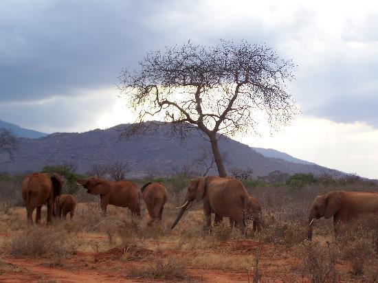 Ndohakashani Tours: foto dal safari 5