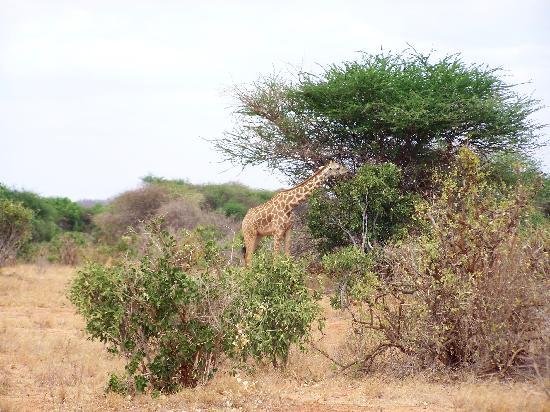 Ndohakashani Tours: foto dal safari 8