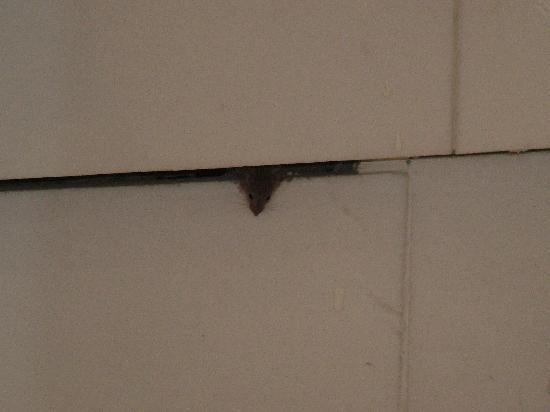 Mitsis Grand Hotel: Il topo che si affaccia dalla fessura sotto la vasca da bagno