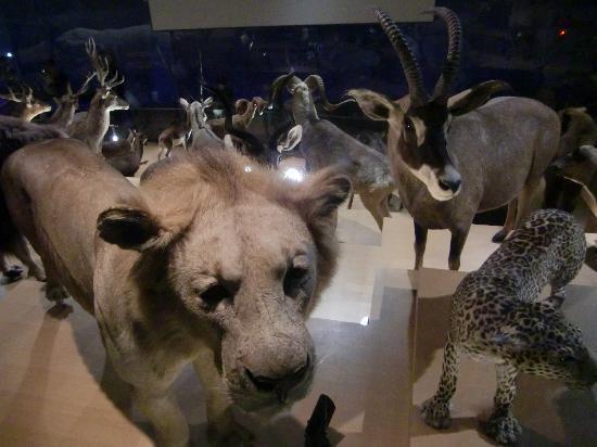 国立科学博物馆张图片