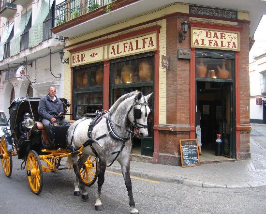 Bar Alfalfa : L'ingresso.