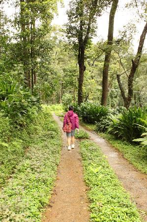 Honey Valley Estate: The trek