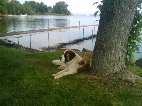 Water's Edge Bed & Breakfast : One of Pat's St. Bernard's-just a beautifully friendly dog