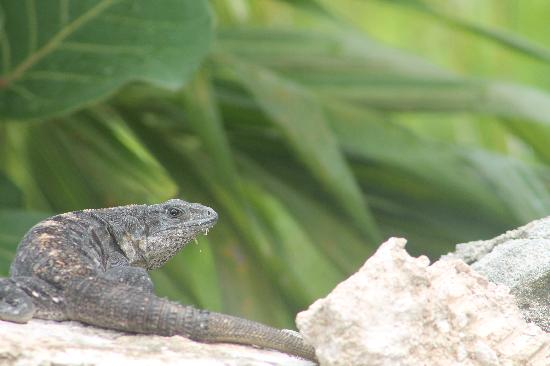 Excellence Playa Mujeres: EPM Wildlife