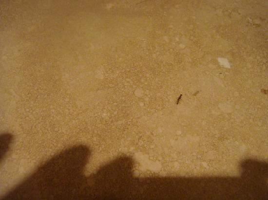 Grotto Bay Beach Resort & Spa: Share your bathroom with ants