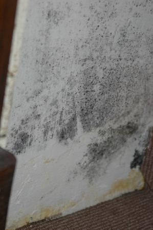 The Farmers Hotel: Mould in the cupboard