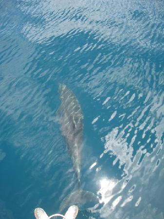 Rich Coast Diving: Dolphins @ The Boat