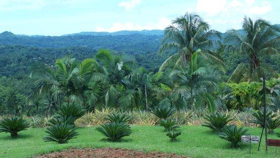 Montego Bay, Jamaica: Scenic 2