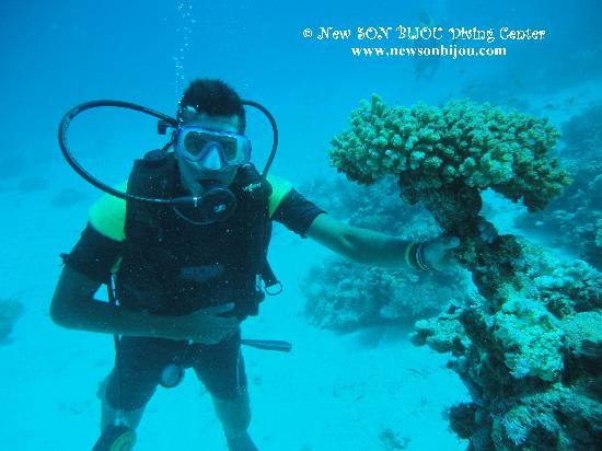 New Son Bijou Diving Center: Khaled picking flowers under the water :) - www.newsonbijou.com -