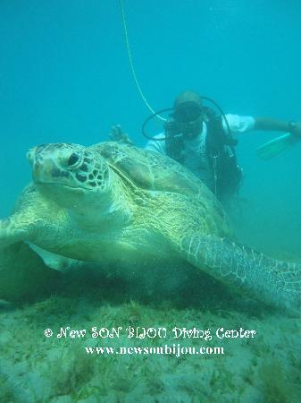 New Son Bijou Diving Center: giant turtle in Red Sea - www.newsonbijou.com -