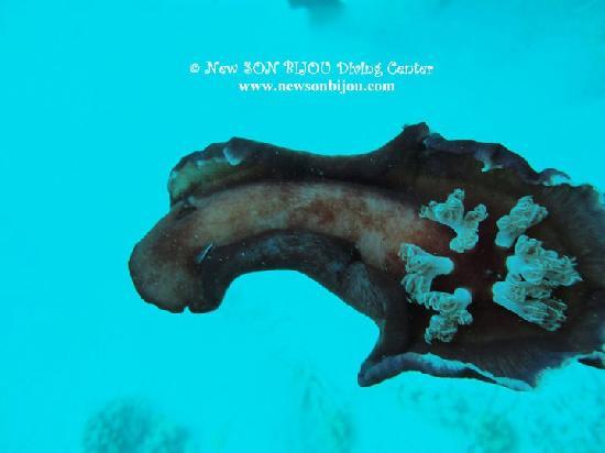 New Son Bijou Diving Center: spanish dancer - www.newsonbijou.com -
