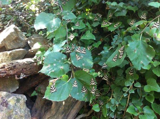 """Πεταλούδες, Ελλάδα: """"butterfly valley"""" paros"""