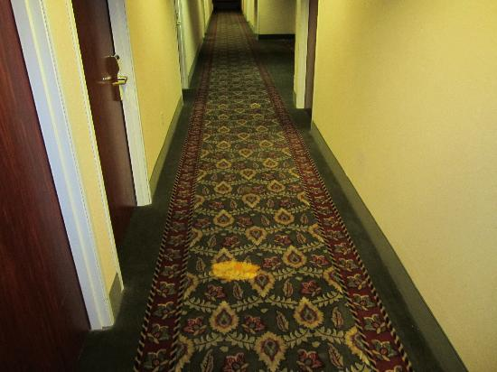 Quality Inn - Farmington: Carpet outside room