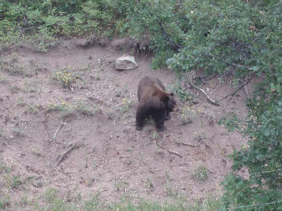 Cuchara, CO: The real deal- Mr Wild Bear