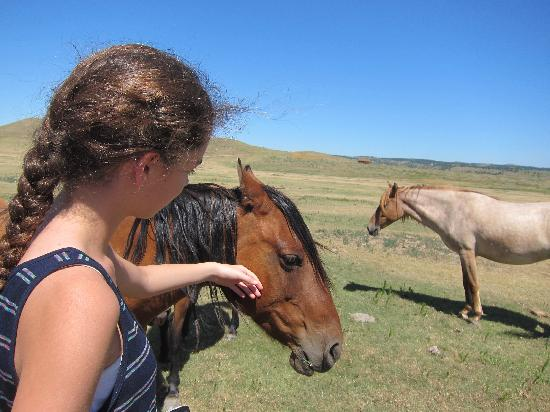 The Black Hills Wild Horse Sanctuary : If you ask, you may be able to pet a horse
