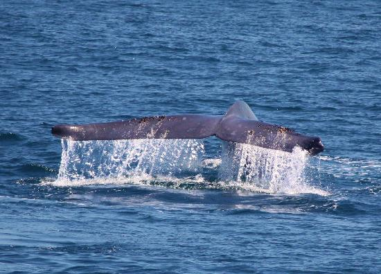 San Diego Whale Watch: Breathtaking .. Need I say more