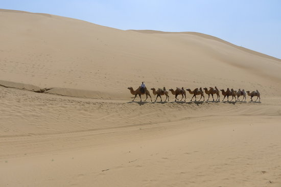 Ordos, China: Camel Riding @ Resonant Sand Gorge (响沙湾)