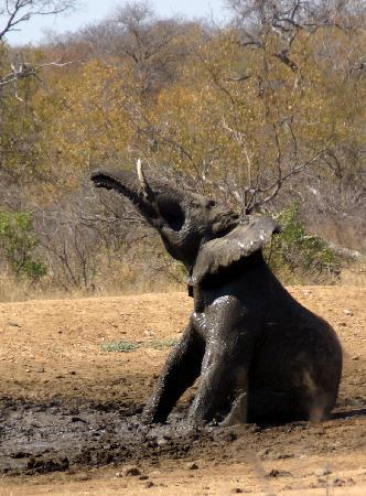 Pondoro Game Lodge: Show: elephant in its bath !