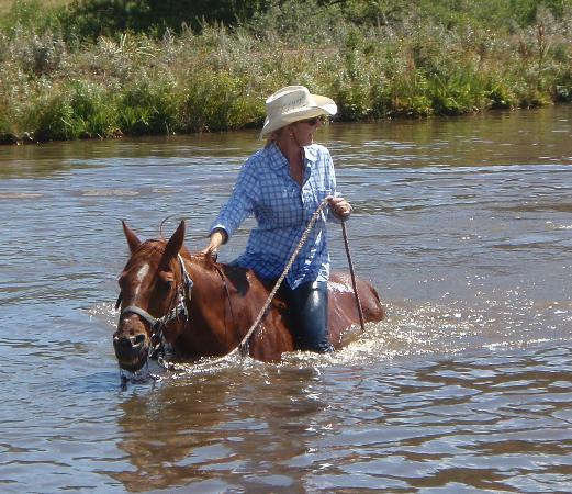 Sundance Trail Guest & Dude Ranch: A long held ambition to swim my horse!