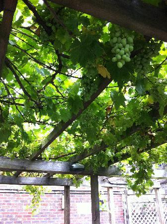 The Real Eating Company: Juicy Vines providing shade out on the decking