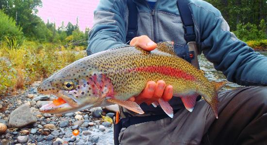 Alaska Fishing Lodge - Wilderness Place Lodge : Those beautiful Rainbows