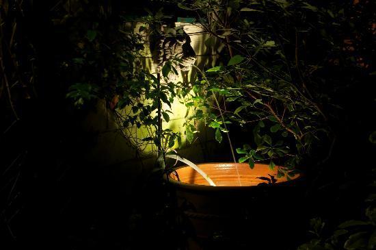 The Hollies: Garden