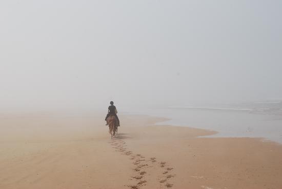 Le Douar des Arganiers : Cheval au soleil levant