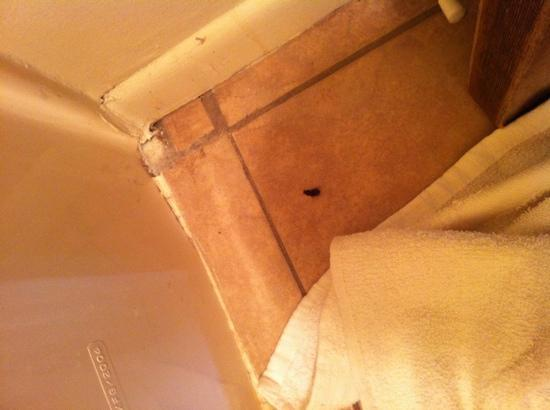 Travelers Lodge : one of the many bugs in the room