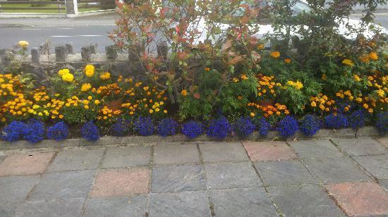 Clareville House B&B: Teresa's flower garden