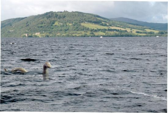 Loch Ness by Jacobite: Nessie si svela
